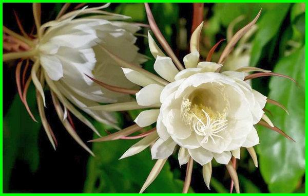 bunga paling mahal di dunia, bunga paling mahal 2019, bunga paling mahal di indonesia, bunga paling mahal saat ini, bunga paling mahal harganya, bunga anggrek paling mahal, bunga hias paling mahal