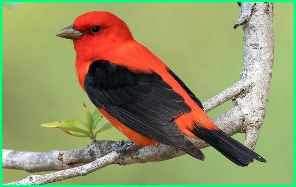 burung hias termahal di dunia, jenis2 burung termahal di dunia, nama burung termahal di dunia, burung paling termahal di dunia, burung termahal di seluruh dunia, 7 burung termahal di dunia, www.burung termahal di dunia, burung yg termahal di dunia, 5 burung termahal di dunia