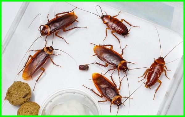cara mengusir kecoa di bawah kasur, mengusir kecoa dengan cepat, cara mengusir kecoa di kamar, cara mengusir kecoa di rumah, cara mengusir kecoa terbang, mengusir kecoa efektif, cara mengusir kecoa efektif