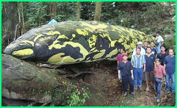 hewan mitos indonesia, 7 hewan mitologi indonesia, 10 hewan mitologi indonesia, hewan mitologi asli indonesia, hewan mitologi di indonesia, foto hewan mitologi indonesia, hewan hewan mitologi indonesia, makhluk mitologi indonesia nyata