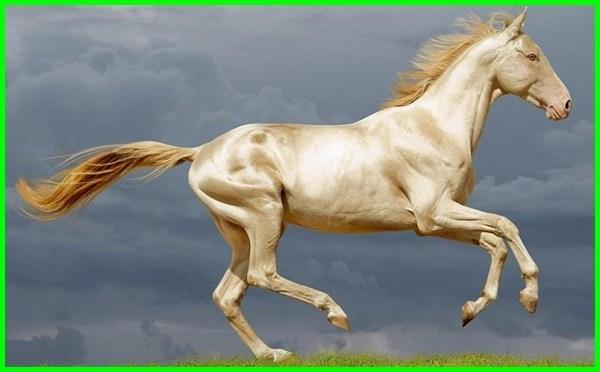 kuda warna putih, kuda warna emas, kuda dan warna, warna gambar kuda, warna rambut kuda