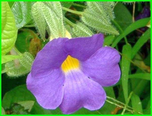 Nama Bunga Foto Foto Makna Dan Artinya Lengkap Dunia Fauna Hewan Binatang Tumbuhan