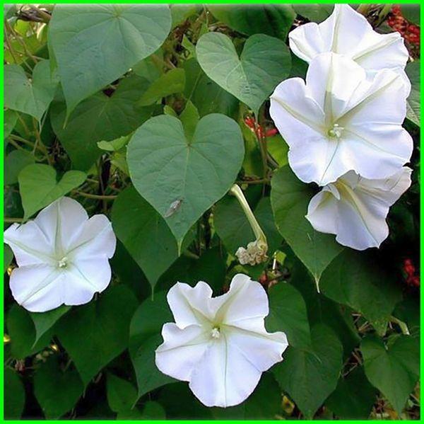 nama bunga dan artinya beserta gambarnya, gambar bunga dan artinya, bunga lengkap artinya bunga dan arti nya, bunga arti nya, bunga putih artinya