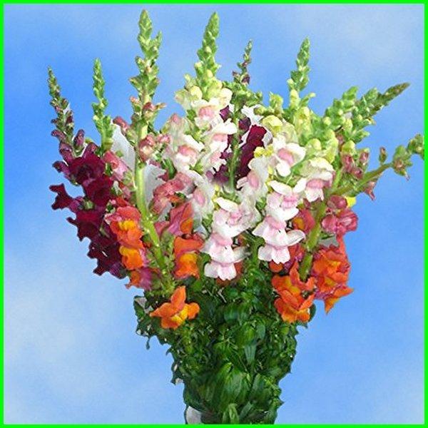 nama bunga yang unik, gambar bunga yang unik, nama bunga yang unik dan cantik, bunga yang bentuknya unik, bentuk bunga yang unik, bikin bunga yang unik, bunga unik cantik