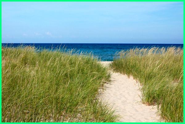 rumput pantai, nama tanaman di pinggir pantai, tanaman dekat pantai, tanaman di pinggir pantai, tumbuhan dataran pantai, tumbuhan di pantai krakal, tumbuhan di pantai, tumbuhan ekosistem pantai, tanaman yang tumbuh di pantai indonesia, tanaman khas pantai