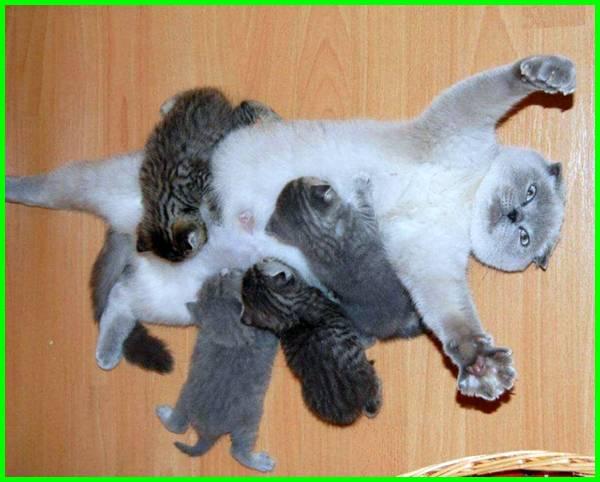 anak kucing dan induknya, anak kucing dan ibunya, anak kucing baru lahir, anak kucing lucu dan imut, anak kucing lucu dan menggemaskan, anak kucing lucu, anak kucing wallpaper anak kucing yang lucu, anak kucing yang baru lahir