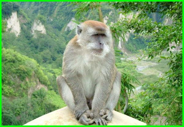 binatang khas malaysia, binatang di malaysia, binatang hutan malaysia, binatang rasmi malaysia, binatang liar di malaysia, binatang asli malaysia, hewan di malaysia, hewan langka malaysia, hewan negara malaysia