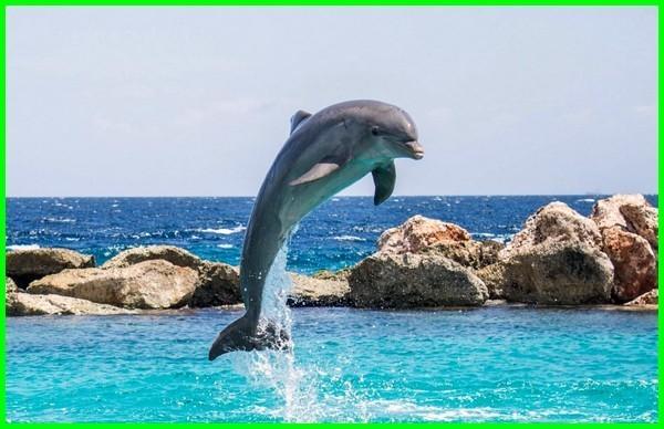fakta lumba lumba, fakta lumba2, fakta lumba lumba sirkus, fakta tentang lumba2, fakta tentang lumba, fakta lumba lumba hidung botol, fakta ikan lumba2