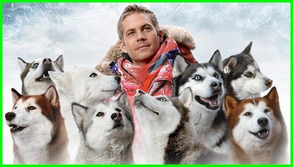 film anjing husky action, film anjing yg setia, film action anjing, film persahabatan anjing, rekomendasi film anjing, film soal anjing, film anjing yang bagus, film anjing yang pintar, film anjing yg bagus