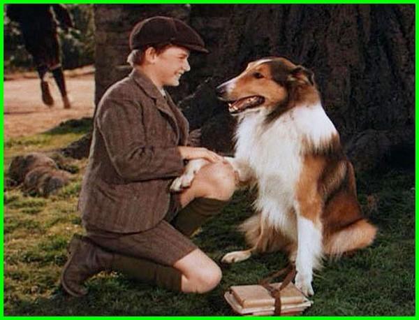 film tentang anjing dan manusia, film tentang persahabatan anjing dan manusia, film persahabatan anjing, rekomendasi film anjing, film soal anjing, film anjing yang bagus