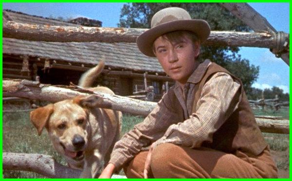film anjing yang bagus, film anjing yang pintar, film anjing yg bagus, film tentang anjing yang setia, film tentang anjing yang bagus