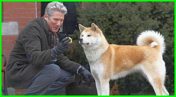 judul film anjing hachiko, film tentang anjing hachiko, nonton film anjing hachiko, film persahabatan anjing, film anjing setia hachiko, film tentang anjing yang bagus, film tentang anjing yang bikin nangis