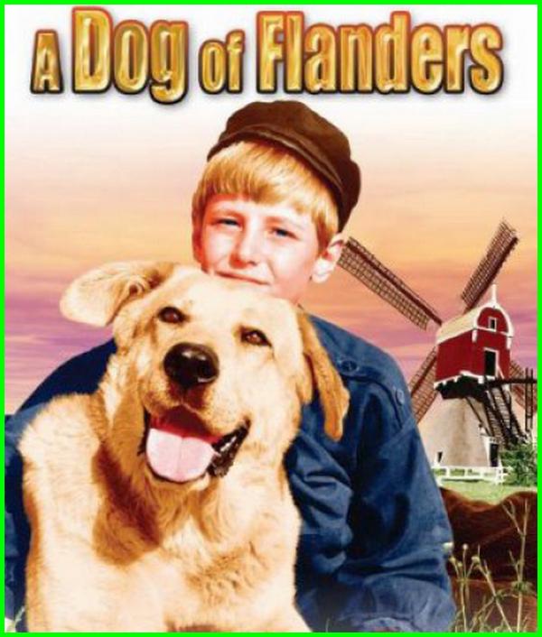 film tentang persahabatan anjing dan manusia, film manusia dgn anjing, film persahabatan manusia dengan anjing, film tentang anjing yang bikin nangis