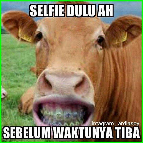 gambar sapi yg lucu, foto sapi selfie yg lucu, gambar sapi lucu kartun, video sapi lucu kartun, wallpaper sapi kartun lucu, video kartun sapi lucu, sapi yg lucu, gambar sapi yang lucu