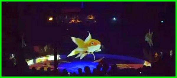 sirkus hologram, sirkus ikan, sirkus internasional