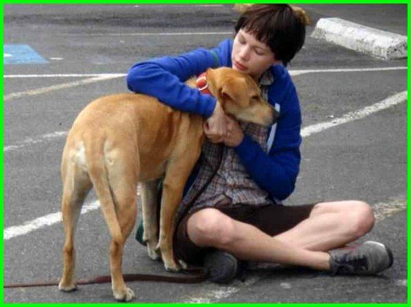 film persahabatan perempuan dan anjing, film persahabatan wanita dan anjing kesayangannya