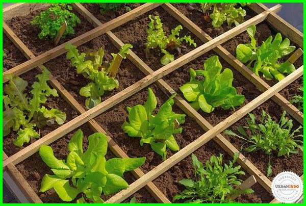 kebun kecil depan rumah, kebun kecil tepi rumah, kebun kecil di halaman rumah, kebun sayur kecil belakang rumah, desain kebun kecil belakang rumah, taman kecil belakang rumah minimalis, taman kecil di rumah btn, taman kecil didalam rumah type 36, taman kecil dibelakang rumah