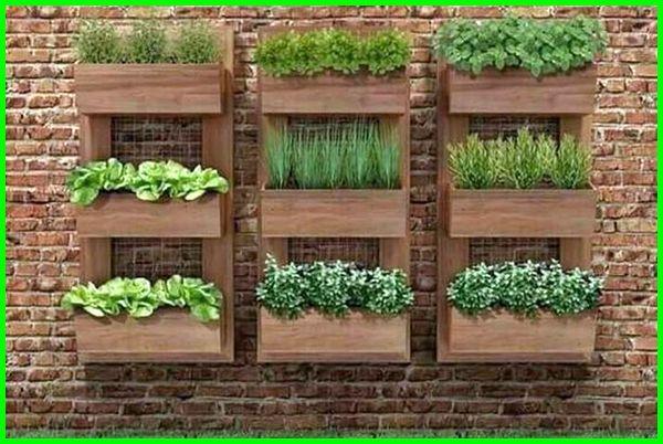 kebun mini tepi rumah, kebun mini samping rumah, kebun mini di samping rumah, kebun sayur mini belakang rumah, desain kebun mini di rumah, kebun sayur mini di belakang rumah, cara membuat kebun mini di rumah