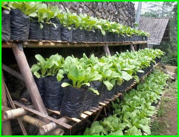 kebun sayur mini rumah, kebun sayur mini belakang rumah, desain kebun mini di rumah, kebun sayur mini di belakang rumah, gambar kebun mini depan rumah, mini kebun belakang rumah, kebun sayur mini di rumah