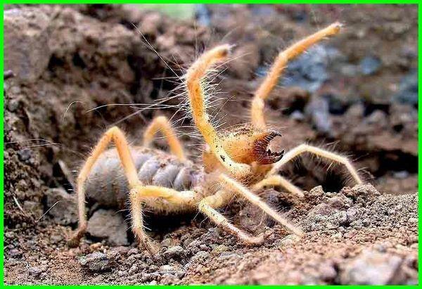 jenis laba-laba di dunia
