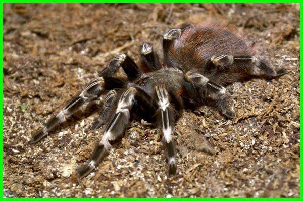 apa saja makanan laba-laba, apa saja ciri ciri laba laba, apa laba-laba makan, apa arti laba-laba, apakah laba laba beracun, apakah laba laba berbahaya