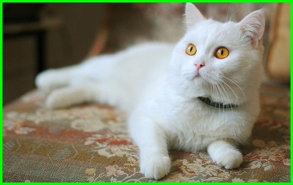 Nama Kucing Korea Dan Jepang Yang Bagus Lucu Dan Keren Beserta Artinya Dunia Fauna Hewan Binatang Tumbuhan Dunia Fauna Hewan Binatang Tumbuhan