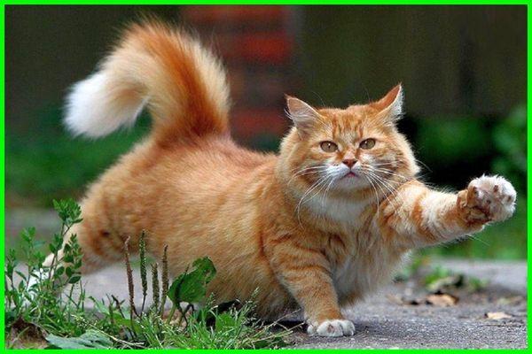 nama kucing jepang dan artinya, nama kucing ala jepang, nama kucing bahasa jepang dan artinya, nama yg bagus untuk kucing bahasa jepang, nama kucing hitam jepang, nama kucing jepang lucu, nama kucing jepang unik, nama kucing versi jepang, nama kucing jepang yang bagus