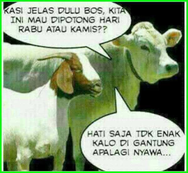 gambar sapi dan kambing kurban lucu terbaru terbaik
