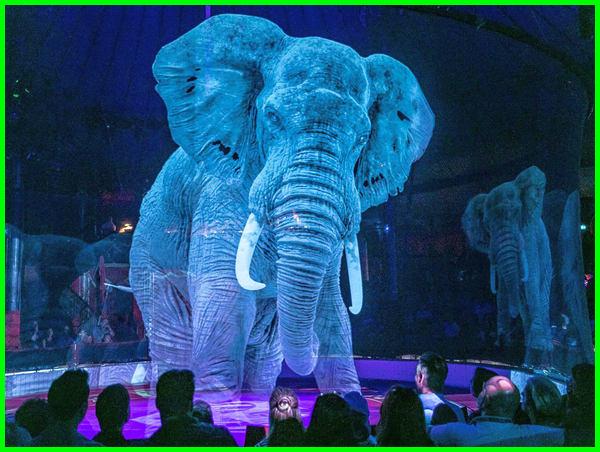 sirkus gajah, sirkus adalah, sirkus hewan, sirkus amerika, siklus adalah, a circus, a circus show, a circus of light, sirkus di Jerman, sirkus gajah ngamuk sirkus gajah main bola