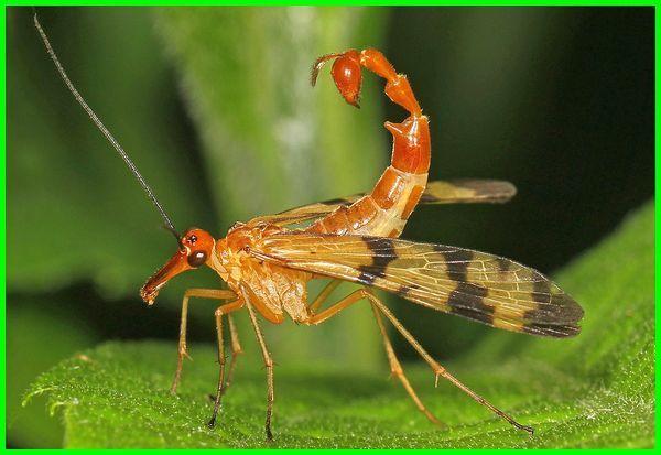 nama serangga unik