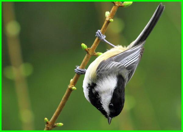 gambar burung di pohon kepala di bawah, gambar burung di dahan kepala di bawah