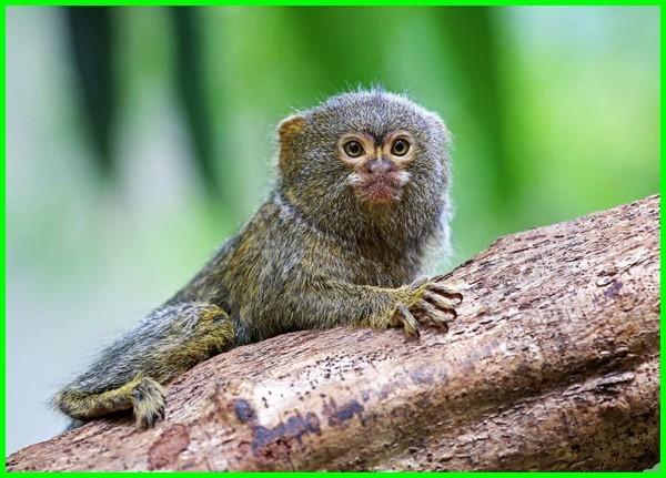 fauna khas brazil, jenis fauna brasil, flora fauna negara brazil, fauna di negara brazil, fauna of brasil, brasil y su fauna