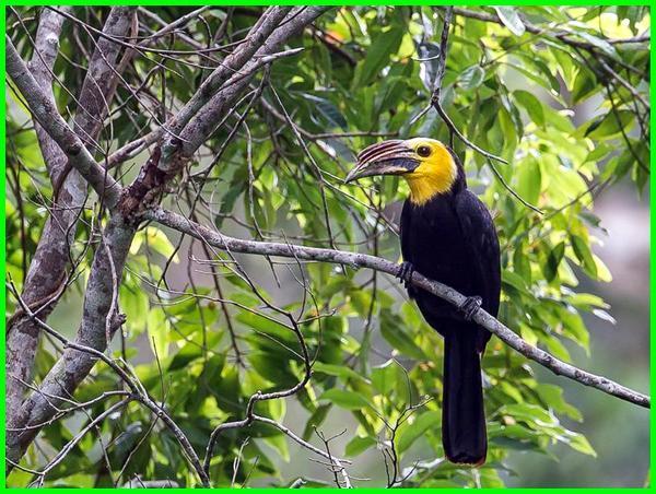 hewan akademik sulawesi, hewan endemik sulawesi barat, hewan yang berasal sulawesi, hewan di sulawesi selatan, hewan dari sulawesi selatan, hewan di sulawesi utara, hewan daerah sulawesi