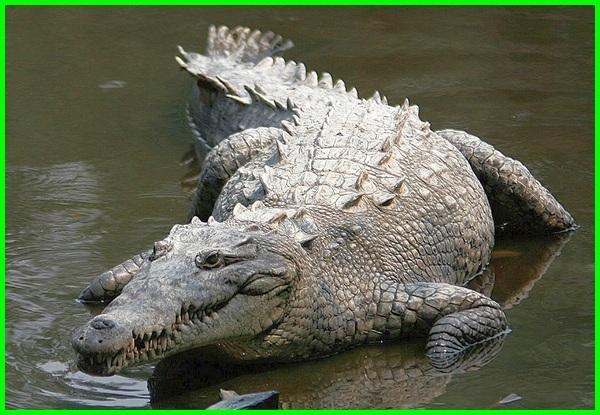 hewan endemik amerika selatan, hewan endemik amerika, hewan endemik benua amerika
