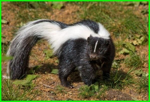 hewan khas amerika serikat, hewan endemik amerika serikat, hewan khas negara amerika serikat, hewan yang ada di amerika serikat, hewan yang berasal dari amerika serikat