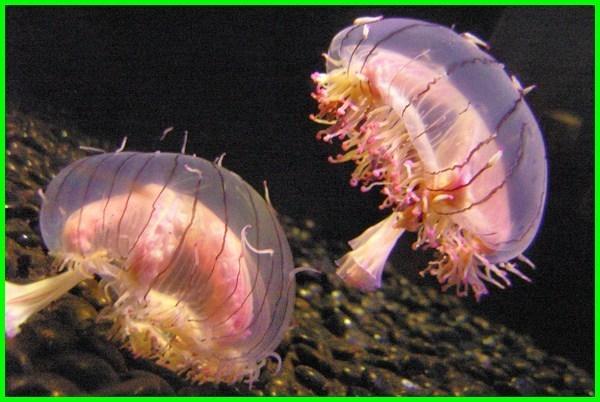 hewan laut yang cantik, hewan laut paling indah, hewan laut yang indah