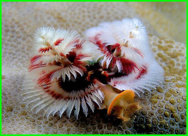 hewan laut yang indah, hewan laut paling indah, hewan laut terindah di dunia