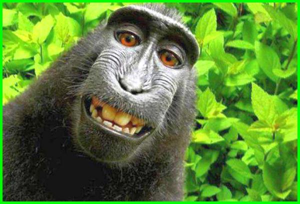 hewan sulawesi langka, hewan yang ada di sulawesi barat, hewan di sulawesi selatan, hewan endemik sulawesi tenggara, hewan kera hitam sulawesi, jenis hewan sulawesi, hewan khas pulau sulawesi, hewan dari pulau sulawesi hewan langka pulau sulawesi