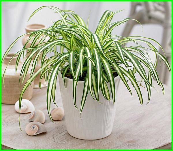 nama tanaman hias dalam ruangan, nama tanaman dalam ruangan, nama tanaman penyegar ruangan, mengapa tanaman harus dikeluarkan dari ruangan di malam hari, untuk ruangan tanaman