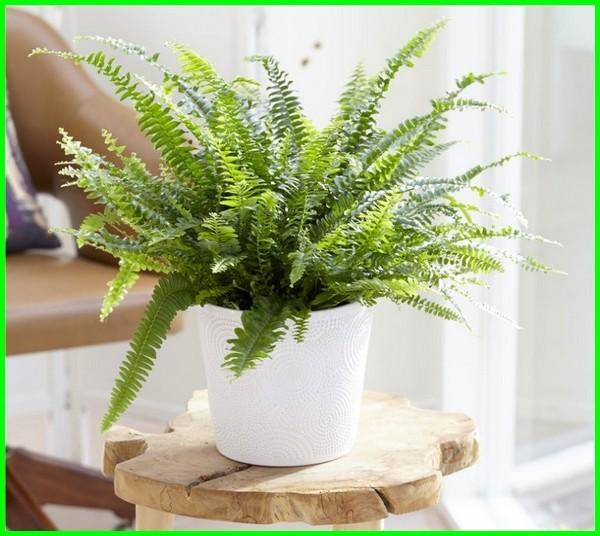 tanaman dalam ruangan, tanaman didalam ruangan, tanaman dalam ruangan kantor, tanaman dalam ruangan terbaik,tanaman di ruangan tertutup, tanaman di ruang tamu