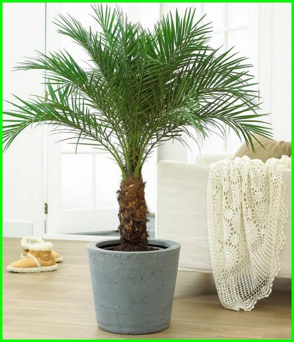 tanaman dalam ruang kelas, tanaman untuk ruang keluarga, tanaman pembersih udara luar ruangan, tanaman mendinginkan ruangan, tanaman penyejuk ruangan rumah, tanaman penyerap racun ruangan, tanaman hias dalam ruangan penyerap racun, tanaman sudut ruangan, tanaman sejuk ruangan