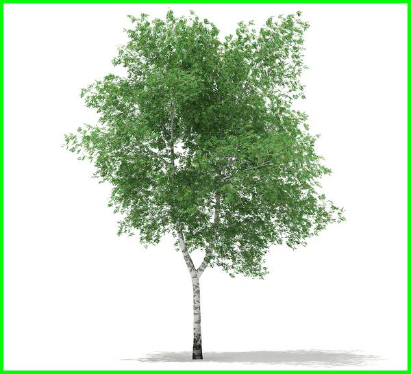 pohon peneduh untuk taman kecil, pohon hias untuk taman kecil, pohon yang cocok untuk taman kecil, tanaman untuk taman kecil depan rumah