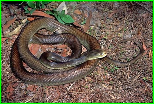 macam macam hewan dari benua australia, jenis hewan australia