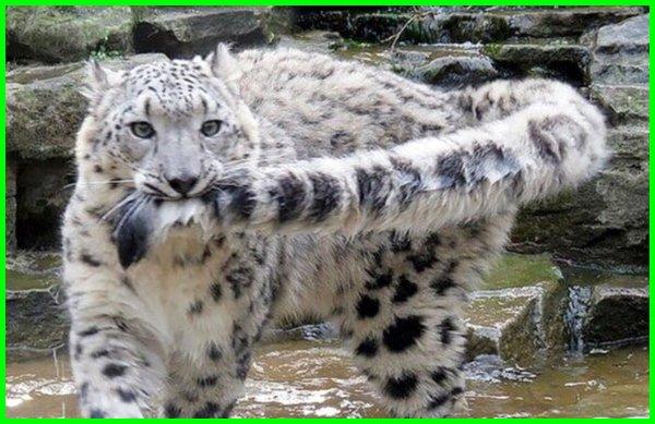 hewan ekor nya panjang, hewan yang ekor panjang, hewan yang memiliki ekor panjang, gambar binatang ekor panjang