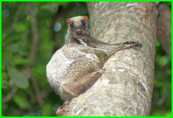 binatang di singapura, nama hewan di singapura, hewan langka dari singapura, jenis hewan di singapura, jenis hewan endemik singapura, binatang singapura hari ini, hewan hewan singapura, hewan khas singapore, binatang khas singapura