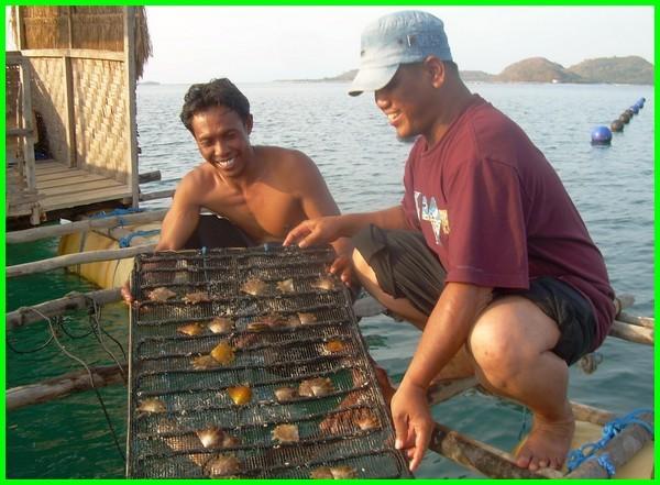 budidaya mutiara di indonesia, budidaya mutiara di bali, budidaya mutiara lombok, budidaya mutiara di lombok, budidaya mutiara laut, budidaya mutiara air laut, budidaya kerang mutiara air laut, cara budidaya mutiara air laut, budidaya mutiara air tawar