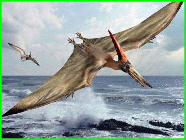 dinosaurus terbang namanya, dinosaurus terbang png, dinosaurus terbang kartun, dinosaurus terbang di akhir zaman kapur, dinosaurus terbang pada zaman kapur tts, dinosaurus terbang akhir zaman kapur, dinosaurus terbang adalah, dinosaurus terbang apa namanya, dinosaurus terbang zaman kapur, dinosaurus terbang pada zaman kapur