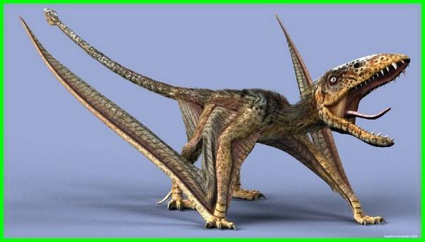 foto dinosaurus terbang, gambar dinosaurus terbang, gambar dinosaurus terbang terbesar, dinosaurus ikan terbang, jenis dinosaurus terbang, nama dinosaurus terbang, penampakan dinosaurus terbang, dinosaurus terbang terkuat, nama dinosaurus yang terbang