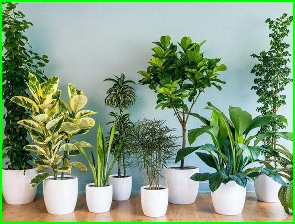 fungsi tanaman hias di rumah, fungsi tanaman hias indoor, fungsi tanaman hias secara umum, manfaat tanaman hias adalah brainly, apa manfaat tanaman hias, apa fungsi dari tanaman hias, apa fungsi media tanaman hias, apa manfaat menanam tanaman hias, apa sajakah manfaat tanaman hias, fungsi tanaman hias bagi manusia