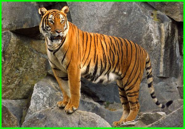 hewan dilindungi di laos, hewan yang dilindungi laos, nama hewan khas laos, hewan ciri khas laos
